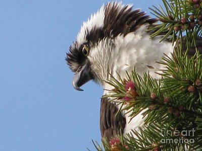 Photograph - Osprey  by Leone Lund