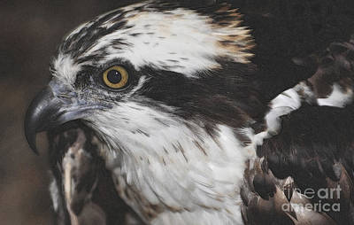 Art Print featuring the photograph Osprey by Lydia Holly