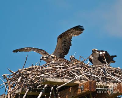Photograph - Osprey Nest by Harry Strharsky
