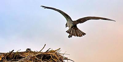 Art Print featuring the photograph Osprey Nest by Joe Urbz