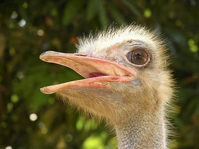 Ostrich Photograph - Ostrich by Bjorn Svensson