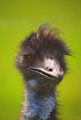 Ostrich Photograph - Ostrich by Carson Ganci