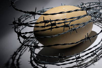 Ostrich Egg Surrounded By Barbed Wire Art Print by Sami Sarkis