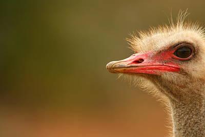 Ostrich Photograph - Ostrich Eye by Bruce J Robinson