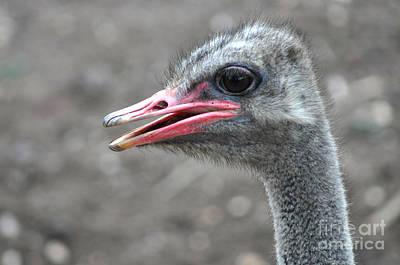 Ostrich Head Art Print by Joanne Kocwin