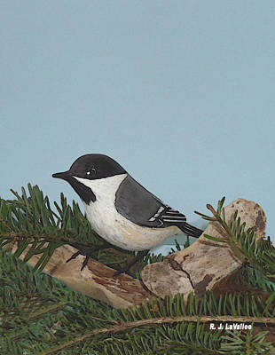 Photograph - Our Chickadee by Roland LaVallee