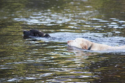 Photograph - Out For A Swim by Angi Parks