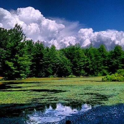 Landscape_lover Photograph - Out In The Woods by Dan Piraino
