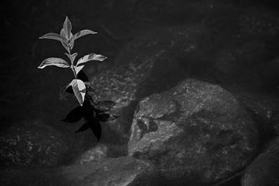 Out Of The Water Comes Shadows Bw Art Print by Karol Livote
