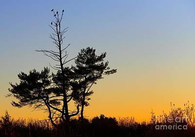 Art Print featuring the photograph Out On A Limb by Davandra Cribbie