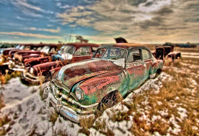 Photograph - Out To Pasture by Colette Panaioti
