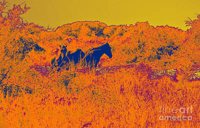 Photograph - Outer Banks Horses by Paulette B Wright