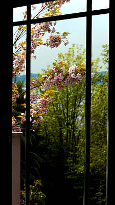 Outside My Window Photograph - Outside My Patio A Garden Blooms by Marie Jamieson