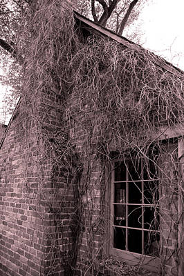Vines Photograph - Over Grown by LeeAnn McLaneGoetz McLaneGoetzStudioLLCcom