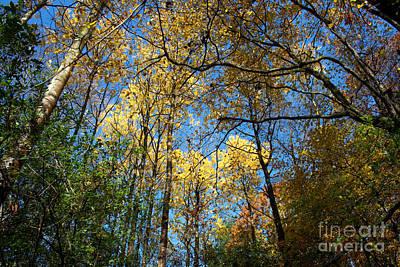 Photograph - Overhead Glory by Barbara McMahon