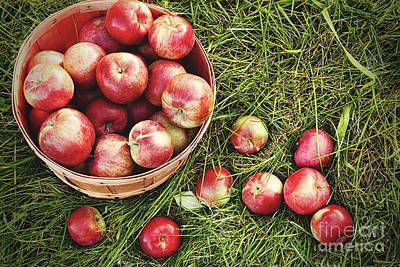 Overhead Shot Of A Basket Of Freshly Picked Apples Art Print by Sandra Cunningham