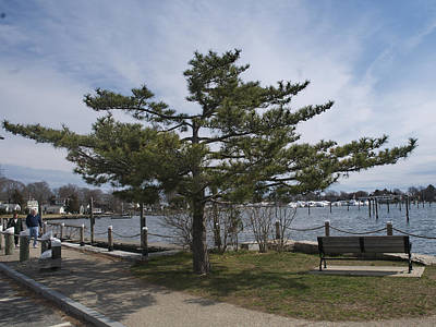 Photograph - Overlooking Wickford Harbor by Barry Doherty