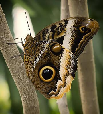 Owl Butterfly 1 Art Print by Bill Tiepelman