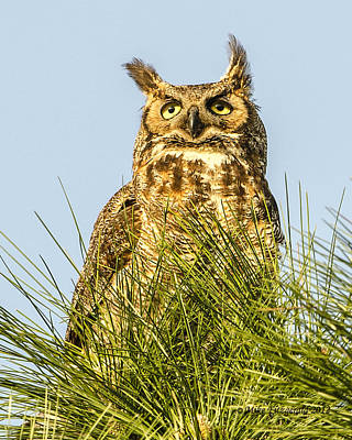 Photograph - Owl Contemplation by Mike Fitzgerald