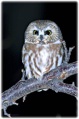 Photograph - Owl by Edward Kovalsky