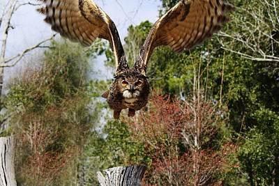 Owl In Flight Art Print by Paulette Thomas