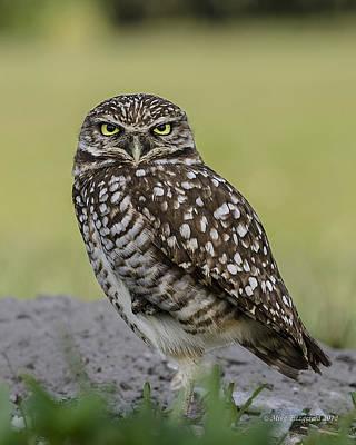 Owl Stare Art Print