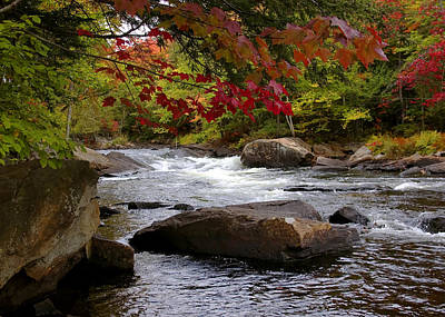 Fall Colour Digital Art - Ox Tongue River Algonquin by Pat Speirs