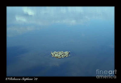 Oyster Photograph - Oyster In Clouds by Rebecca Stephens