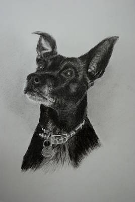 Drawing - Ozzie by Lynn Hughes