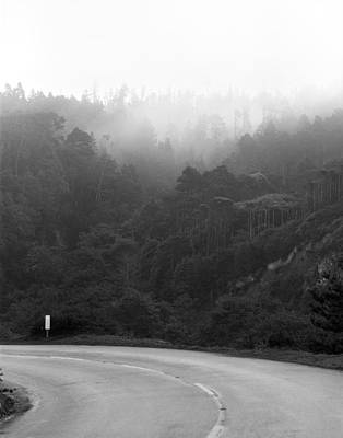 Photograph - Pacific Forests by Jan W Faul