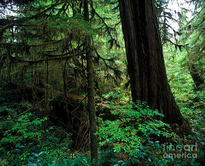 Photograph - Pacific Rim National Park 1 by Terry Elniski