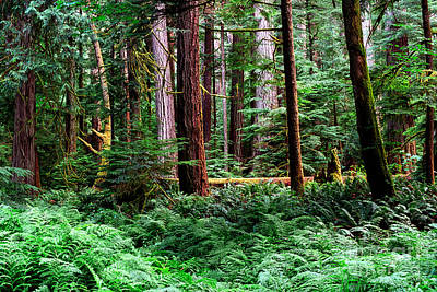 Photograph - Pacific Rim National Park 10 by Terry Elniski