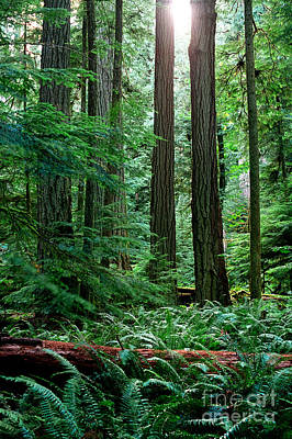 Photograph - Pacific Rim National Park 12 by Terry Elniski