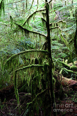 Photograph - Pacific Rim National Park 13 by Terry Elniski