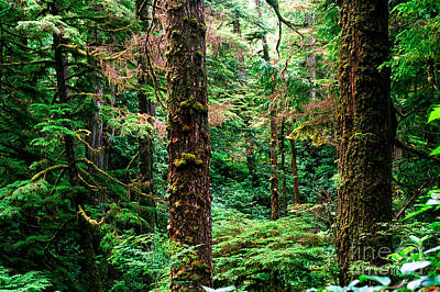 Photograph - Pacific Rim National Park 14 by Terry Elniski
