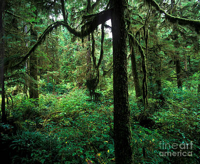 Photograph - Pacific Rim National Park 2 by Terry Elniski