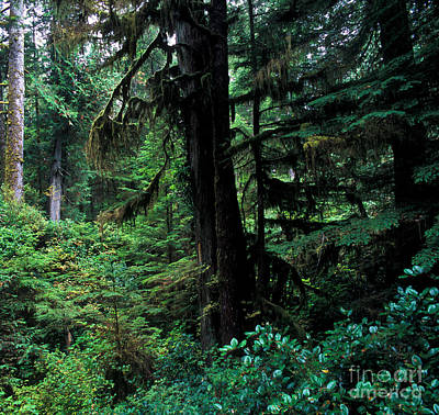 Photograph - Pacific Rim National Park 3 by Terry Elniski