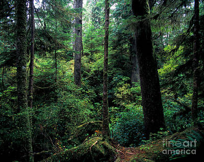Photograph - Pacific Rim National Park 4 by Terry Elniski