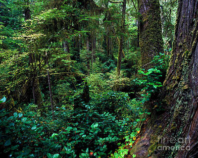 Photograph - Pacific Rim National Park 5 by Terry Elniski