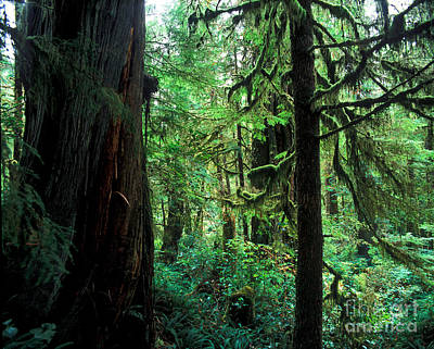 Photograph - Pacific Rim National Park 6 by Terry Elniski
