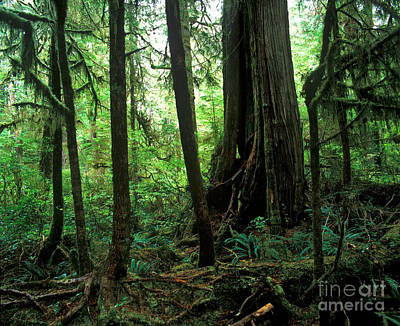 Photograph - Pacific Rim National Park 7 by Terry Elniski
