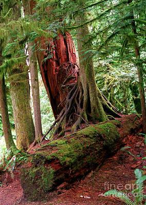 Photograph - Pacific Rim National Park 9 by Terry Elniski