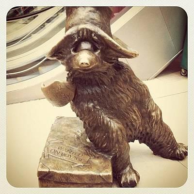 Icon Photograph - Paddington Bear by Marce HH