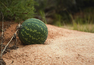 Photograph - Paddy Melon Dreaming by Paul Svensen