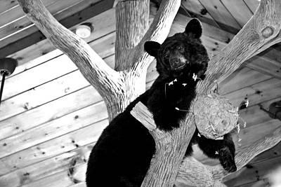 Virginia Photograph - Paint Bank Bear by Betsy Knapp