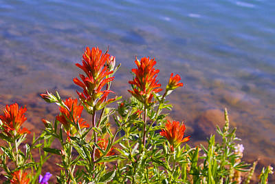 Paintbrush At Water's Edge Art Print