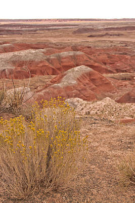 Photograph - Painted Desert 13 by Susan OBrien