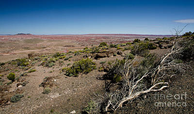 Photograph - Painted Desert by Royce  Gideon