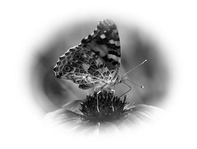 Painted Lady 1 Original by Todd Hostetter