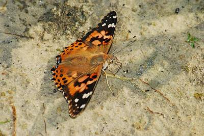 Clouds Rights Managed Images - Painted Lady 8620 3370 Royalty-Free Image by Michael Peychich